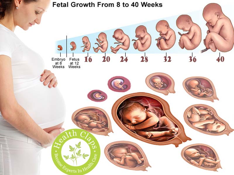Study Baby Growth